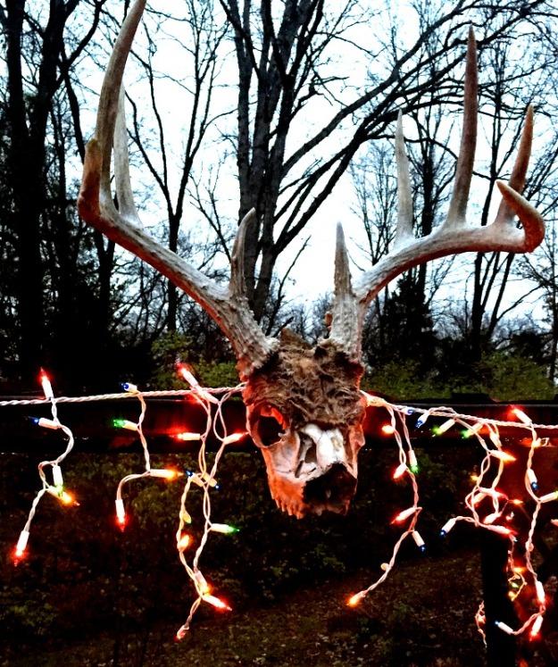 Festive buck! haha