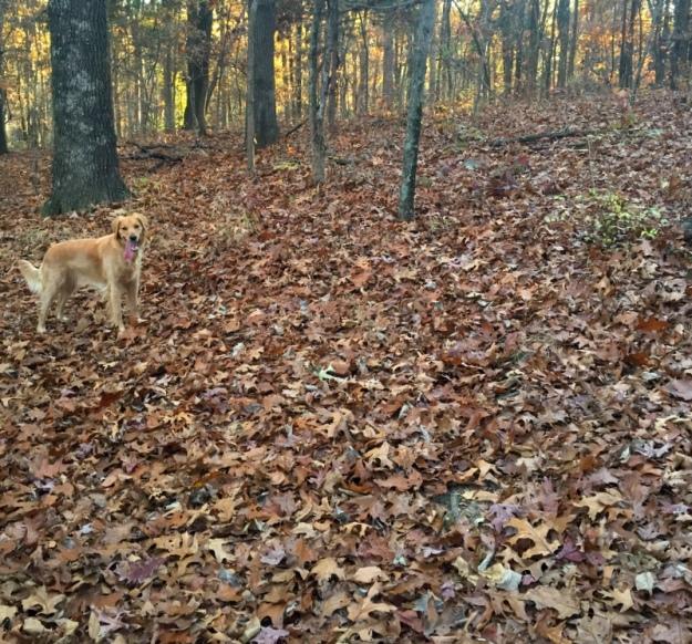 Dexie in the woods