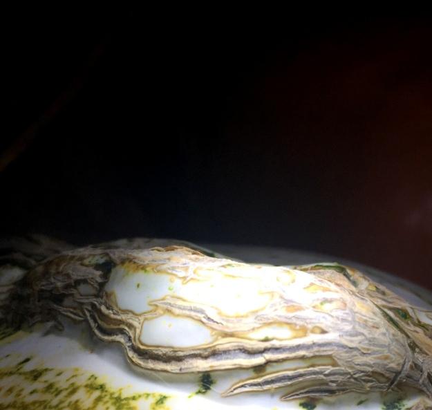Squash skin detail