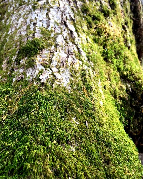 Christmas-green moss