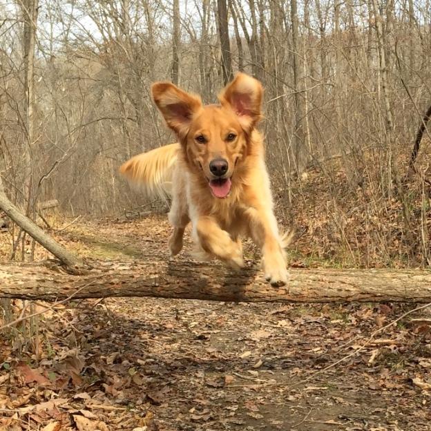 Dexie leaping