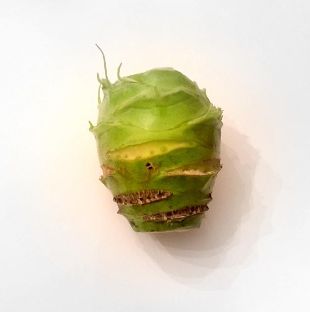 This kohlrabi looks like the grinch's head!