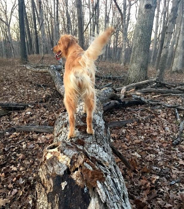 Dexie loves the woods