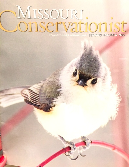 A perfect February cover of Missouri Conservationist