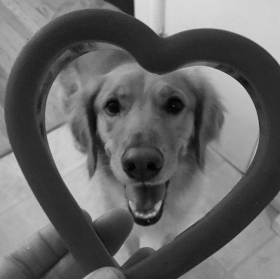 Dexie says happy Valentines day!