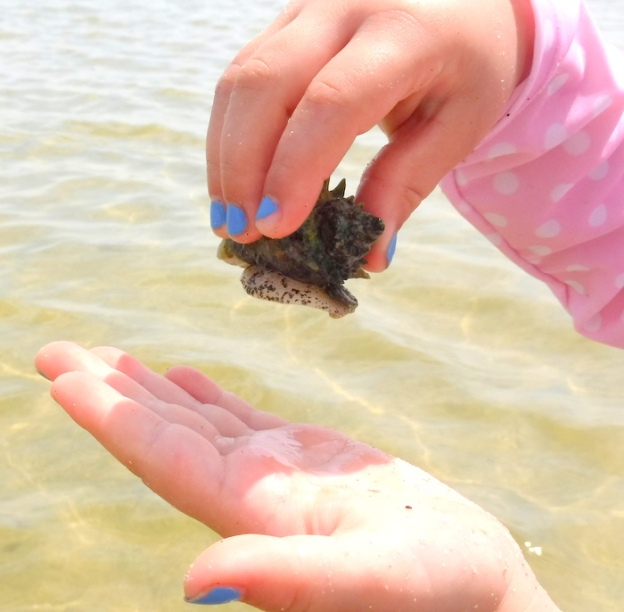 There are many live shells in the estuary