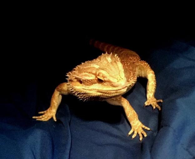 Cool reptile