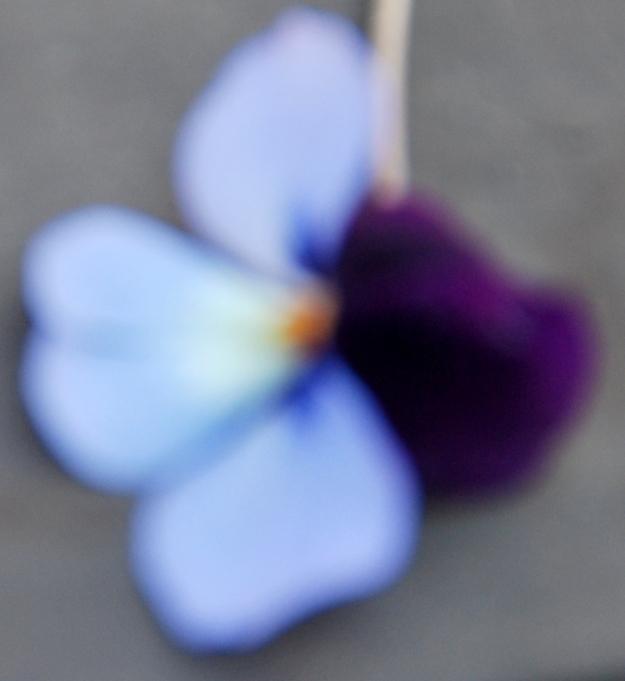 Blurry Violet