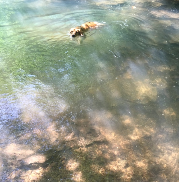 Enjoying a dip in the creek after a run