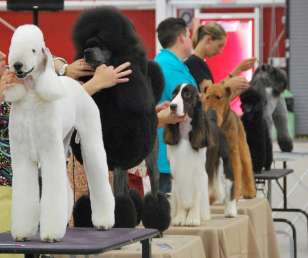 Some more traditionally groomed dogs