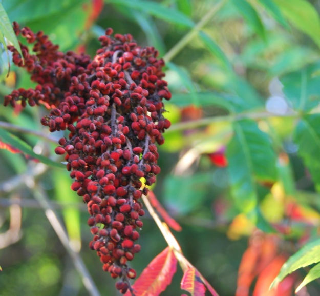 There is tons of sumac in the neighbors' yard; I really want to start using this more in cooking