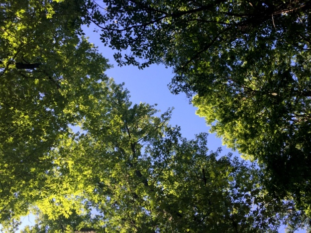 Love staring up at the trees (from the Eno hammock!)
