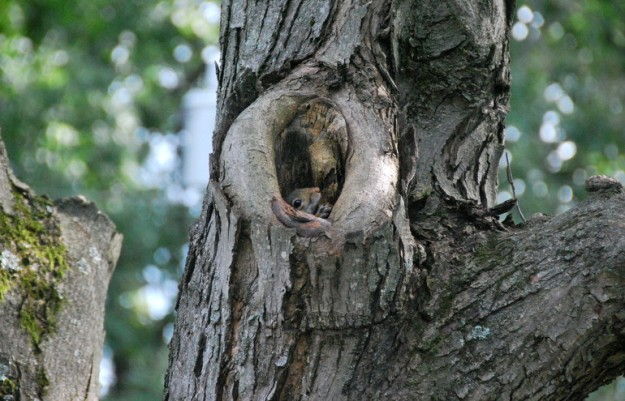Shy squirrel (though I would think it would be scarier in that tree; home of the snakes!)