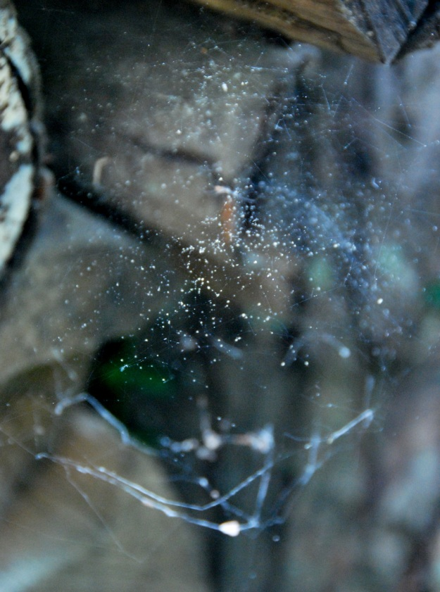 A delicate web behind the wood pile