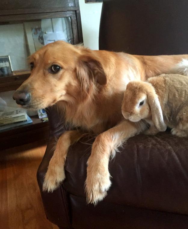 Dexie & Butkus; twins!