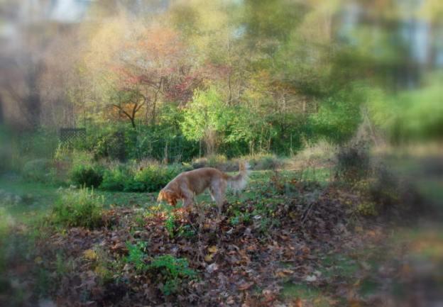 Dexie in the garden