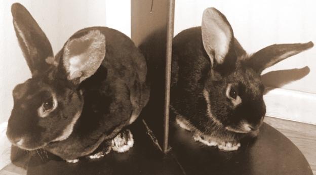 Halloween bunnies