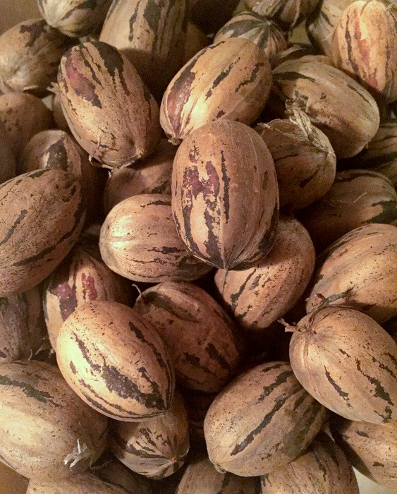 Fresh local pecans (from a coworker's yard)