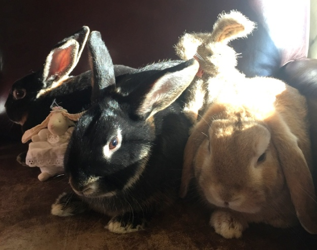 Bunnies snuggling in the sunshine
