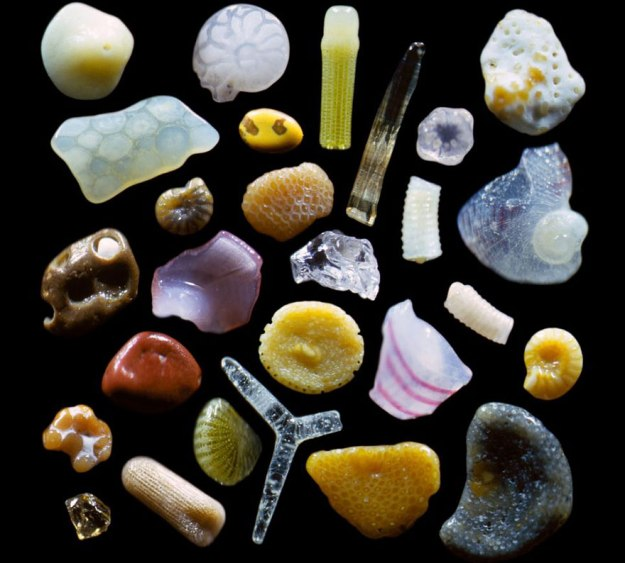 The Microscopic Photography of Dr. Gary Greenberg (source)