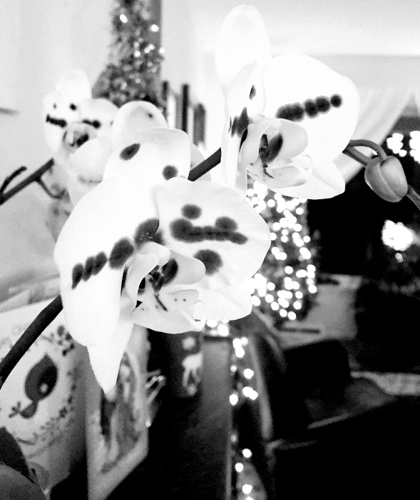 Black and white orchid