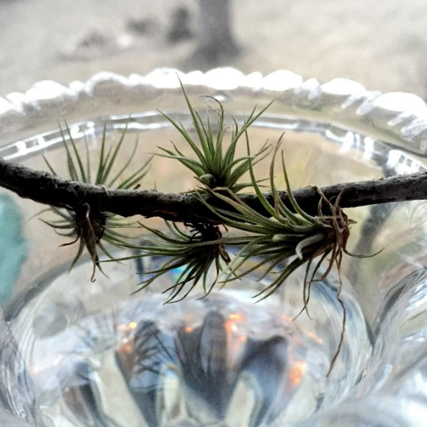 Little Airplants