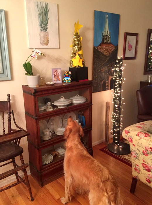 Dexie admiring the decor
