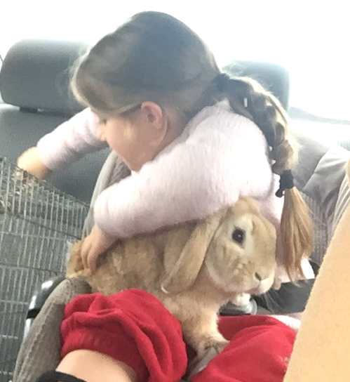 Bringing the bunnies to school (again!)