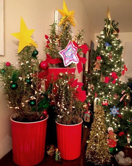 Christmas Rosemary