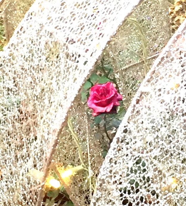 Frozen rose and Christmas lights