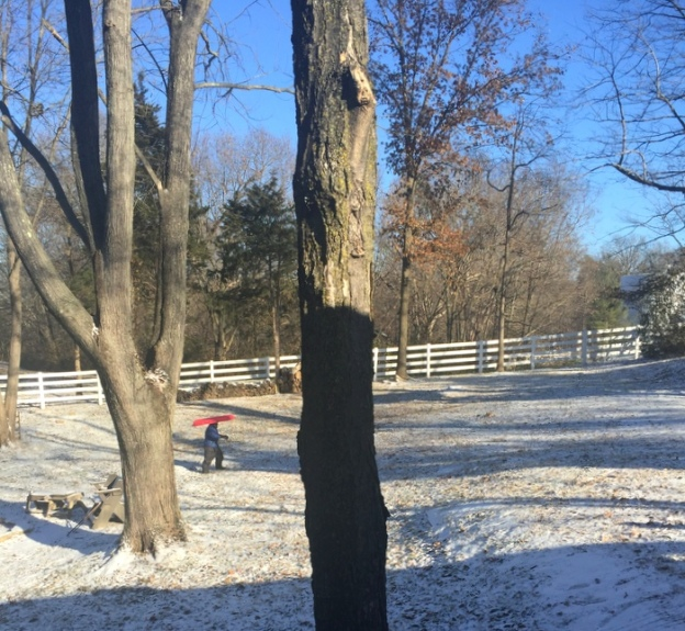 Back yard sledding