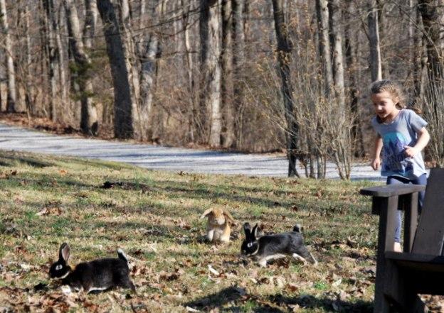 Chasing bunnies