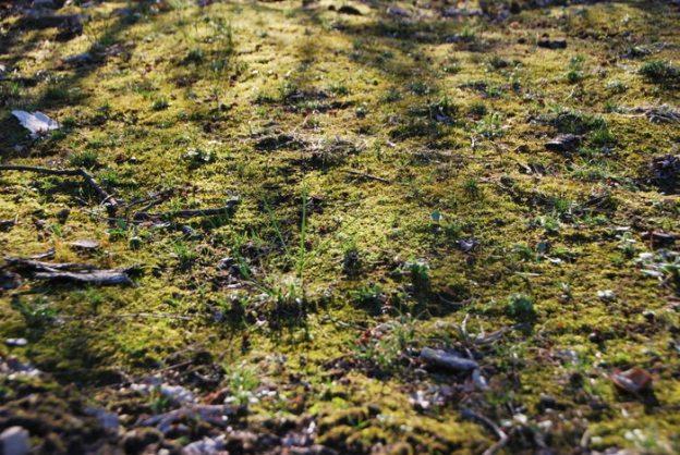 Mesmerizing Moss