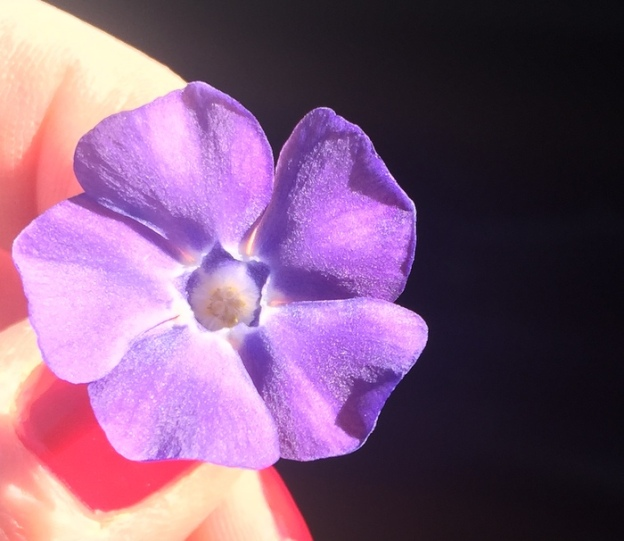Little Bloom